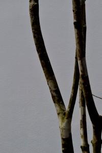 2014-04-02 010